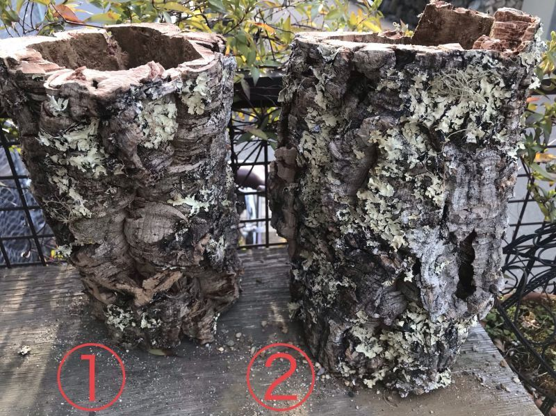 画像1: 天然コルク樹皮