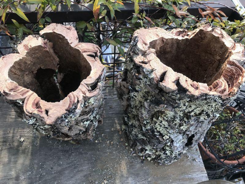 画像2: 天然コルク樹皮